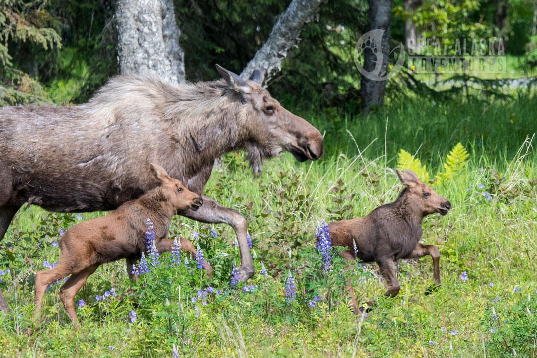 Father and Son Alaskan Adventure