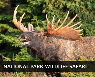 National Park wildlife safari