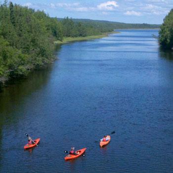 3 Kayaks Paddling up Moose