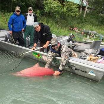 Alaska Fishing Kenai 75 Pound King Release