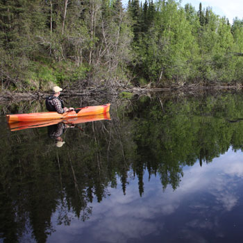 Moose River Paddling Greatland Safari